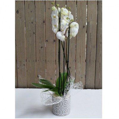 Phaleanopsis blanca en base cerámica blanca