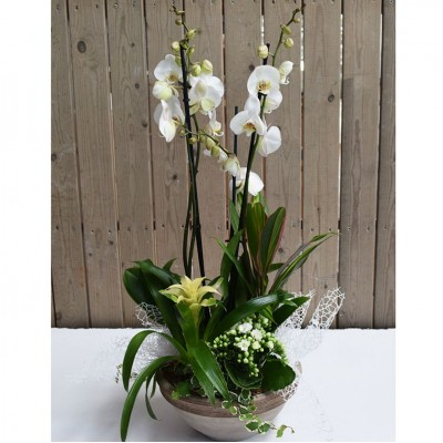 Ceramic bowl with phaleanopsis blanca