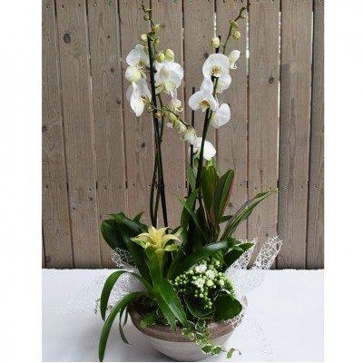 Cuenco de cerámica phaleanopsis blanca