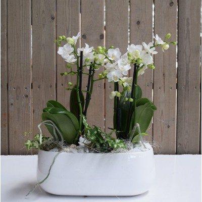 Comprar Base cerámica con orquídea mini Barcelona