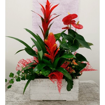 Wooden box with guzmania, anthurium, vriesea and kalanchoe
