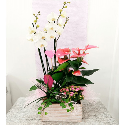 Caixa de fusta amb plantes variades