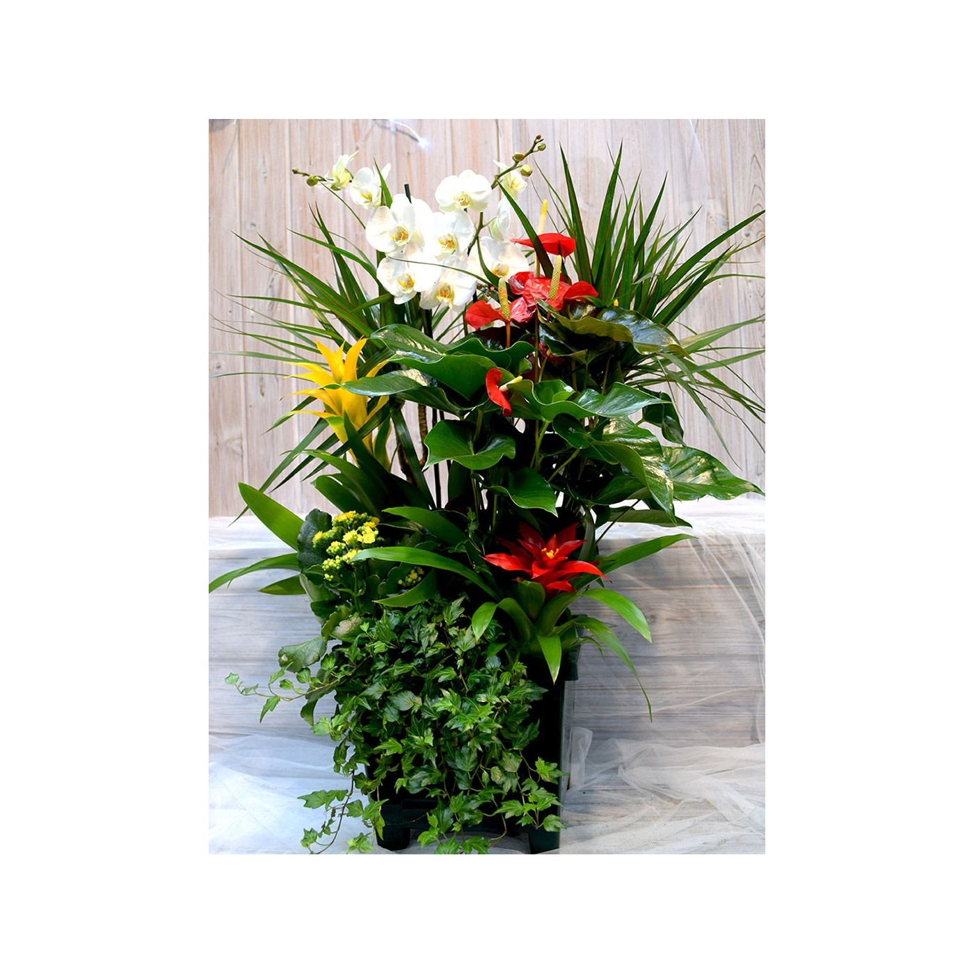 Base cuadrada con anthurium,Phaleanopsis, guzmania, kalanchoe