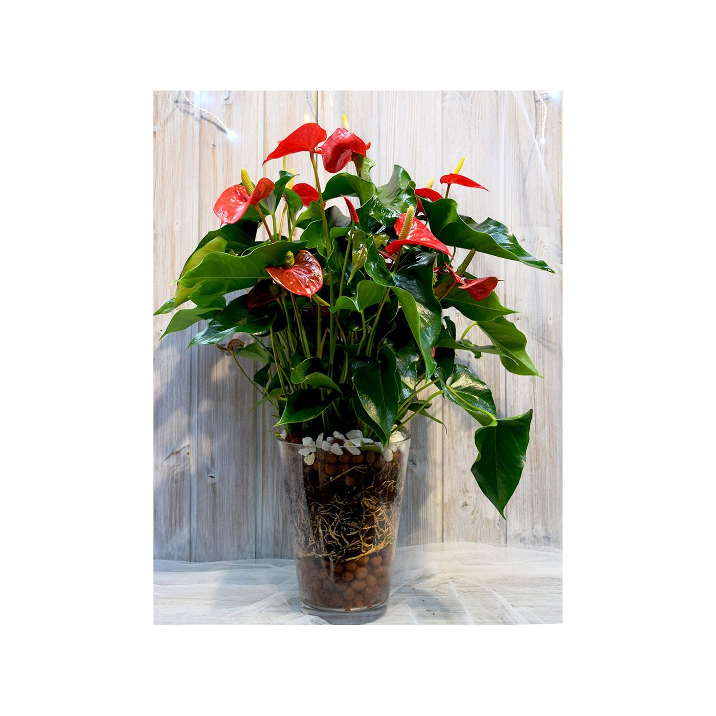 Vase anthurium and decorative stones
