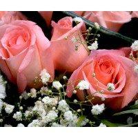 Jarrón con bouquet de 18 rosas rosas, paniculata y Osito
