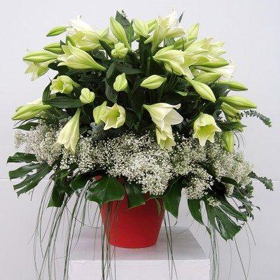 Spectacular vase of lilium...