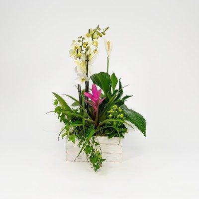 Turanika plants arrangement