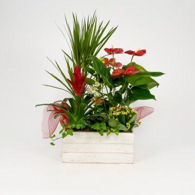 Baikal plants arrangement