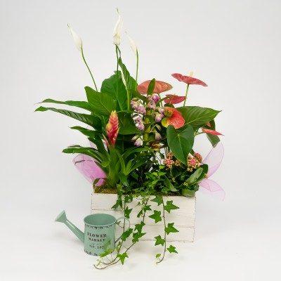 Victoria plants' arrangement