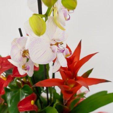 Comprar Grupo de plantas Nyssa Barcelona