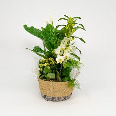 Aral plants' arrangement