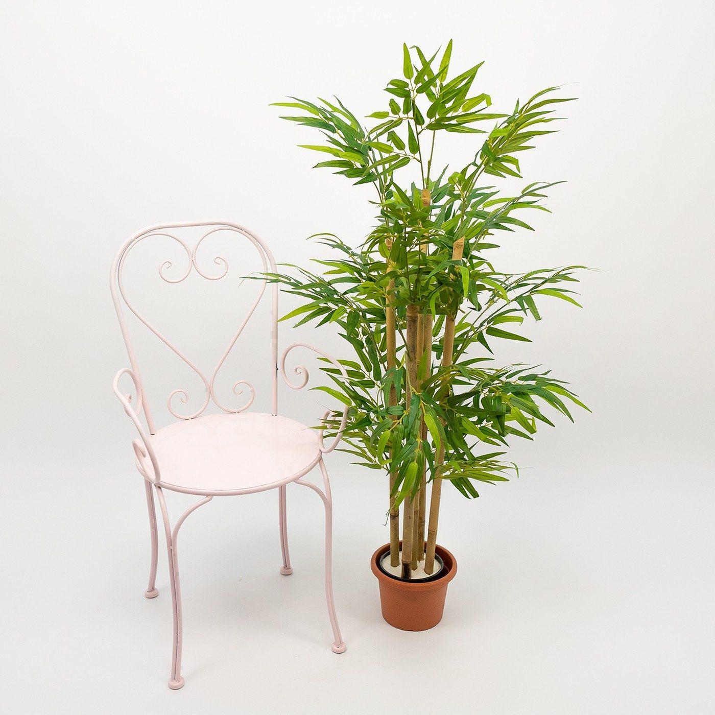 Comprar Bambú Barcelona