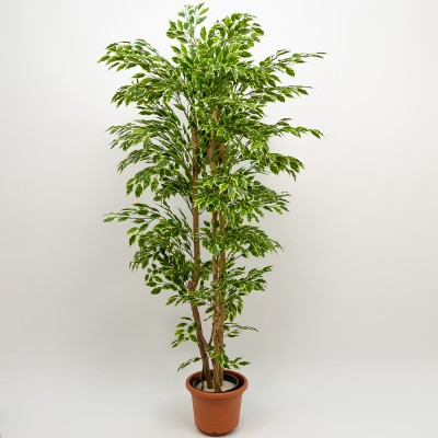 Ficus Hawai Artificial