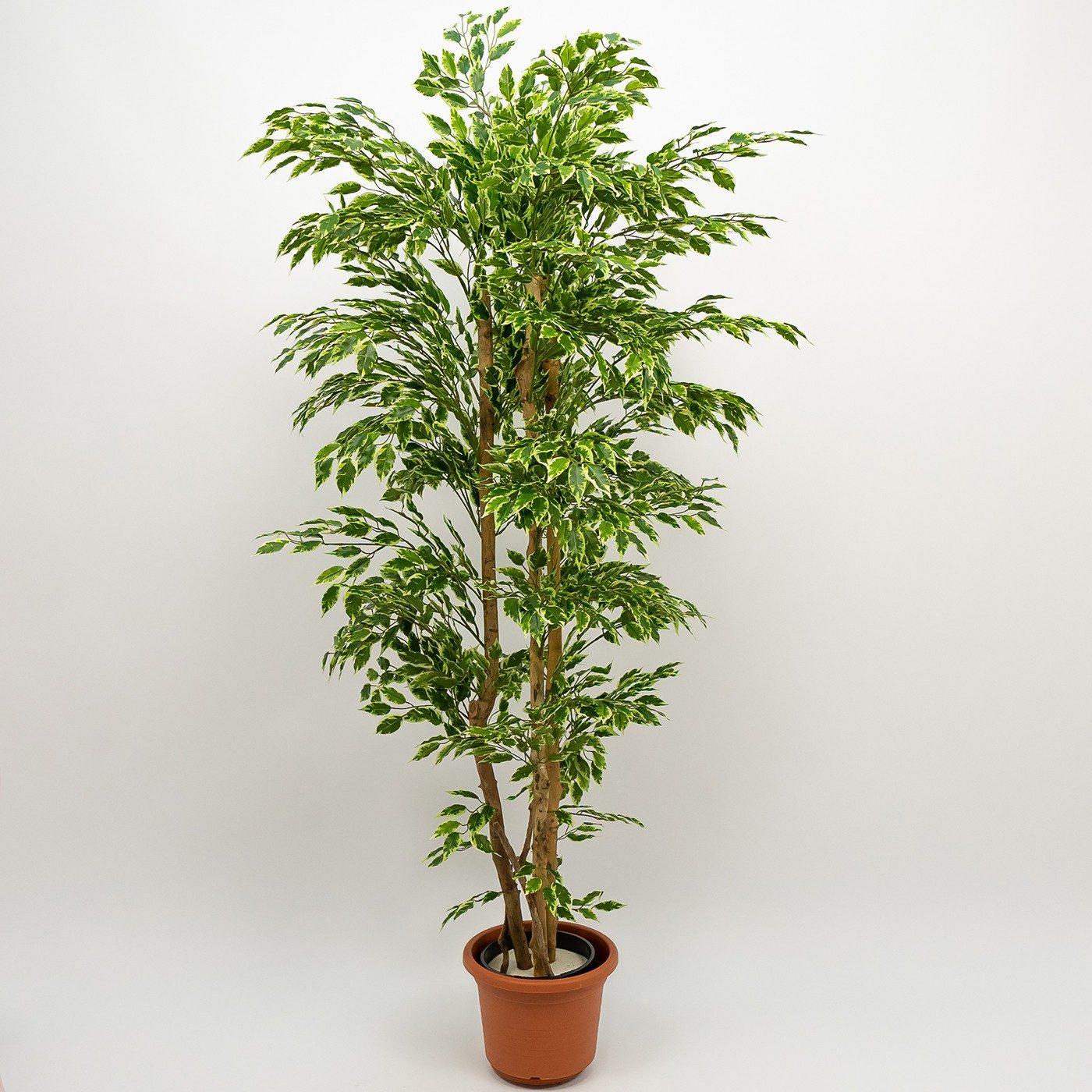 Comprar Ficus Hawai Artificial Barcelona