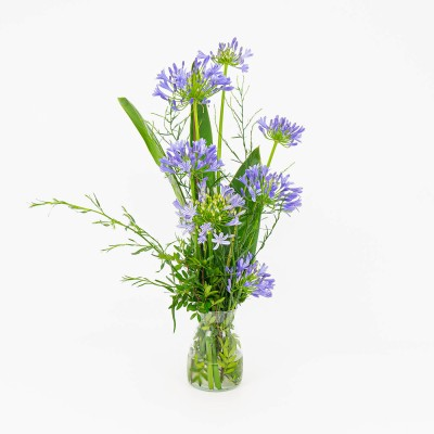 Agapanthus in glass pot