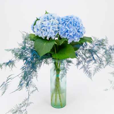 Ramo de hortensias azules XL