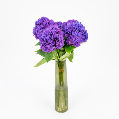 Comprar Ramo hortensias lilas Barcelona
