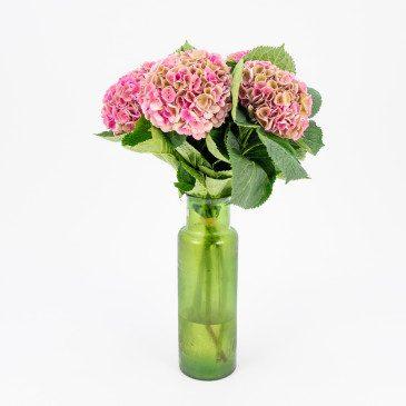 Comprar Ramo de hortensias rosas XL Barcelona