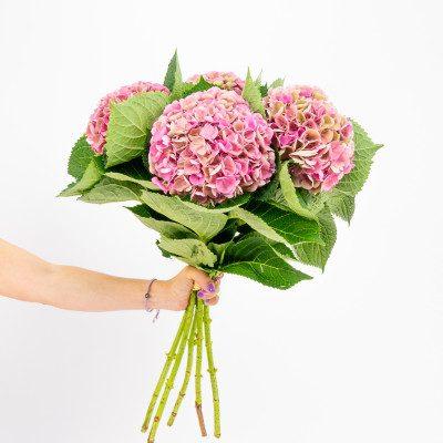Bouquet pink hydrangeas