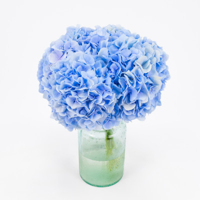 Ramo 5 Hortensias azules 50cm