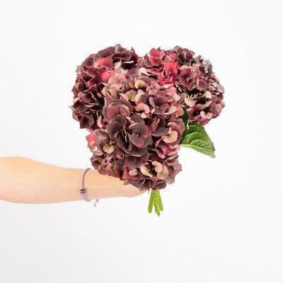 Hortensias granates