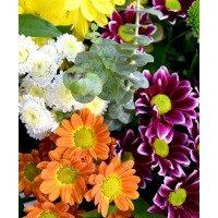 Ram de crisanthem variat